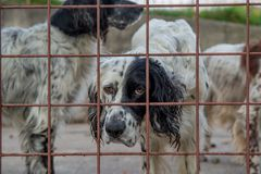 Dog in the fence. Hunting dog in a cage royalty free stock images