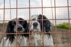 Dog in the fence. Hunting dog in a cage stock photos