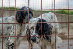 Dog in the fence. Hunting dog in a cage royalty free stock photos