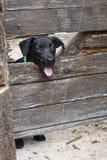 Dog through fence Stock Photos
