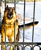 Dog at fence Stock Images