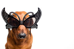 Dog in festive glasses Stock Images