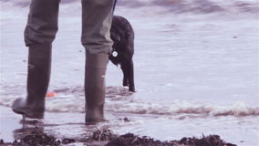 Dog fetching ball from the sea Stock Images