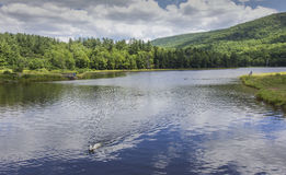Dog fetching ball swimming in lake Stock Images