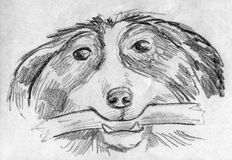 Dog fetching a stick. Happy dog with a stick in it's teeth. Hand drawn pencil sketch Royalty Free Stock Image