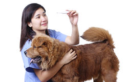 Dog With Fever Stock Image