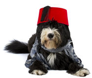 Dog and fez Royalty Free Stock Photos