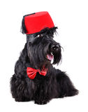 Dog in fez Stock Photo