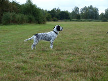 Dog in field Stock Photo