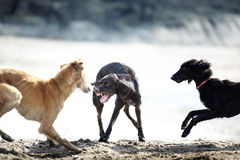 Free Dog Fight Stock Image - 19297061