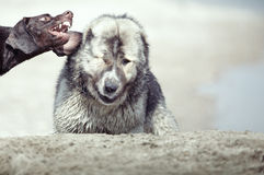 Dog fight Stock Images