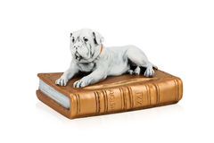 Dog figure on the book Royalty Free Stock Photos
