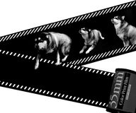 Dog and Filmstrip Royalty Free Stock Photo
