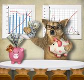 Dog financier teaches his students. The dog financier in glasses is holding a piggy bank with US dollars and teaching his students near financial charts in the royalty free stock photo