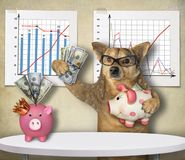 Dog financier with piggy banks. The dog financier in glasses is holding a piggy bank with US dollars near financial charts stock images