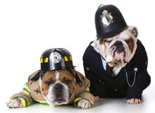 Dog firefighter on policeman Stock Photo