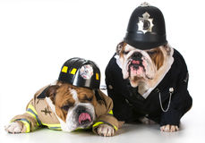 Dog firefighter on policeman Royalty Free Stock Photo