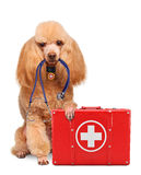 Dog with a first aid kit. On white Royalty Free Stock Image