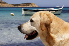 Dog with fishing boat in background Stock Photos
