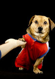 Dog and five. A give me five, dog Royalty Free Stock Image