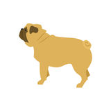 Dog flat pug. Pet illustration and vector design cute puppy breed Royalty Free Stock Photo