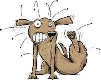 Dog with Fleas. A cartoon dog scratches the fleas off of his body Royalty Free Stock Photography