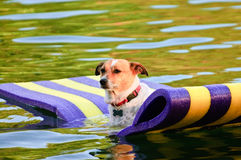 Dog Floating in the Water Stock Photos