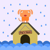 Dog and flood. A cartoon dog stranded on top of a house due to a flood Royalty Free Stock Photos
