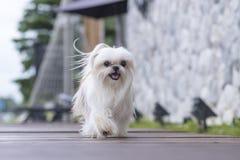 A dog on the floor.  Royalty Free Stock Photos