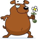 Dog Flower Stock Photos