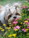 Dog and flower Stock Photo