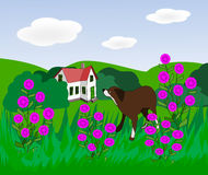 Dog in Flower Meadow. A brown dog in a meadow with pink flowers and a house in the background Stock Images