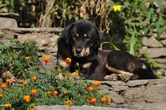 The dog and flower in sunshine Stock Photos