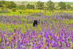 Dog in flowerfield. A dog on his path of life Royalty Free Stock Photography