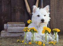 Dog with Flowers Royalty Free Stock Photos