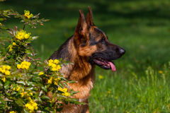 Dog in flowers Royalty Free Stock Photo