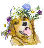 Dog with flowers. Royalty Free Stock Images