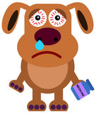 Dog flu Stock Photos