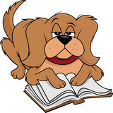 Dog fluffy reading Royalty Free Stock Photo
