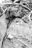 Dog and fly rod. Dog sitting near fly rod Royalty Free Stock Images