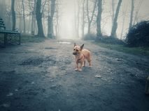 Dog in the fog Royalty Free Stock Images