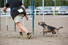 Dog follows the handler Stock Image