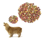 Dog food. Royalty Free Stock Photos