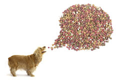 Dog food. Stock Image