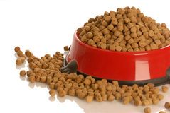 Dog food bowl Stock Images