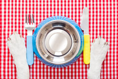 Dog food bowl Royalty Free Stock Image