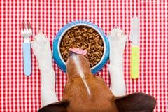 Dog food bowl Stock Photos