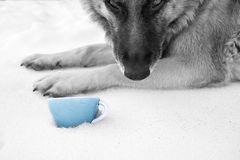 Dog And Food Bowl Stock Photo
