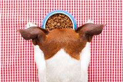 Dog food bowl. On tablecloth,paws and head of a dog stock photography