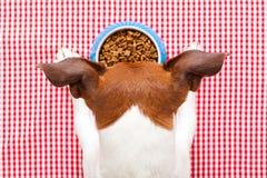 Dog food bowl Stock Photography